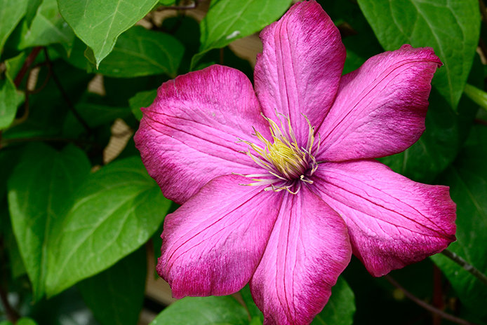 Flowers that survive best in partial sun or partial shade